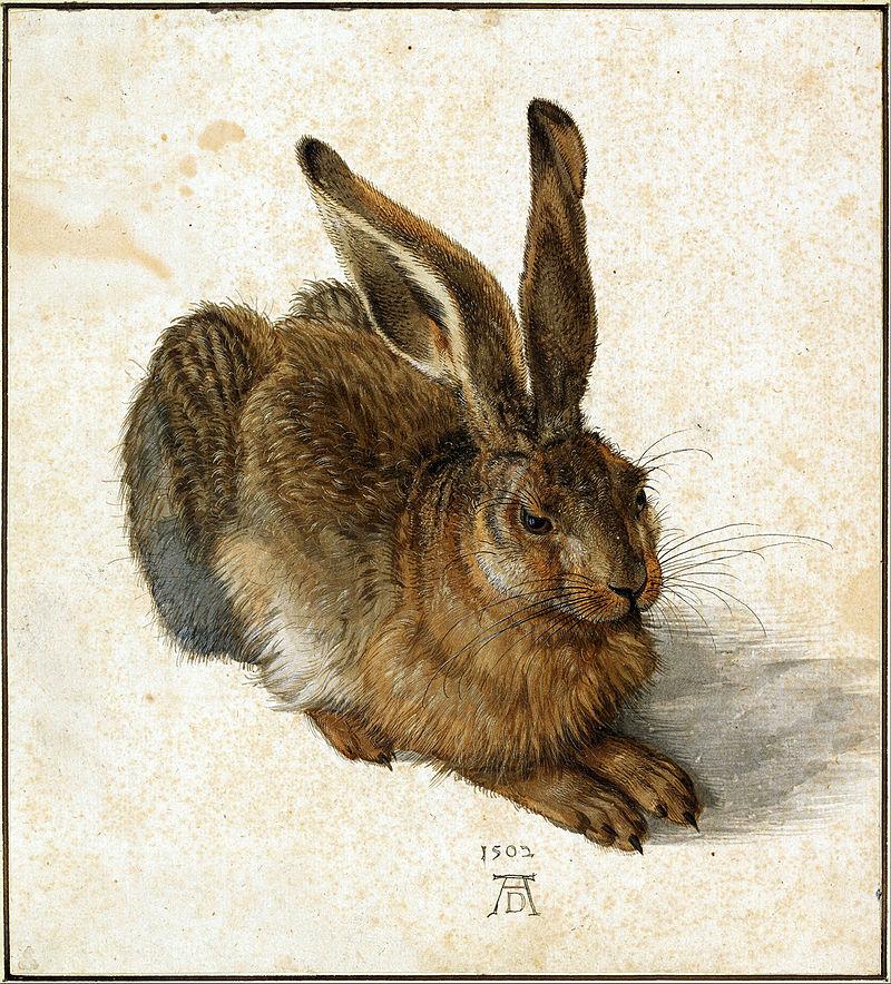 Albrecht_Dürer_-_Hare,_1502_-_Google_Art_Project_retuschiert